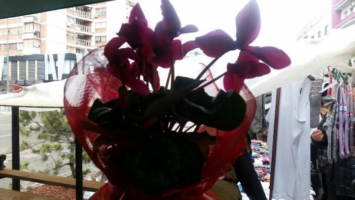 Danas je Sveti Trifun, Valentin i Dan zaljubljenih