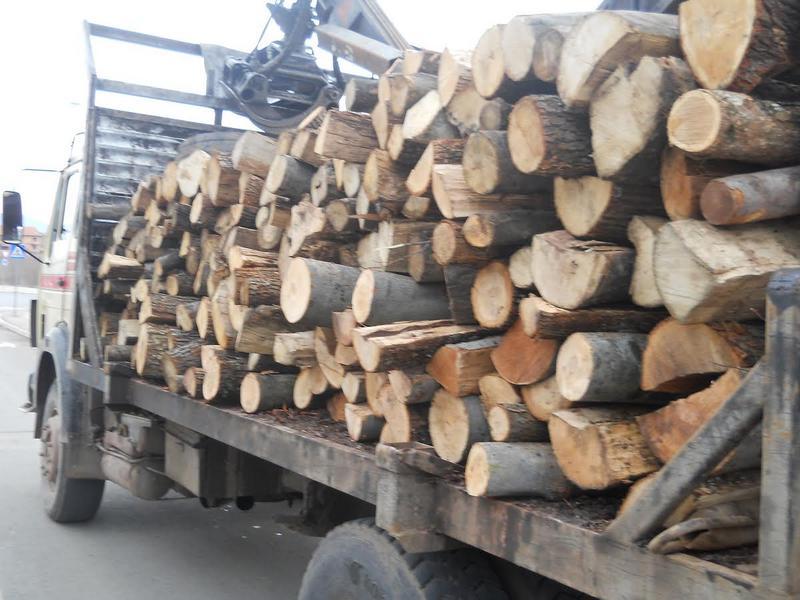 Leskovac: Uhapšeni šumari i njihovi pomagači zbog nelegalne seče i prodaje drveta