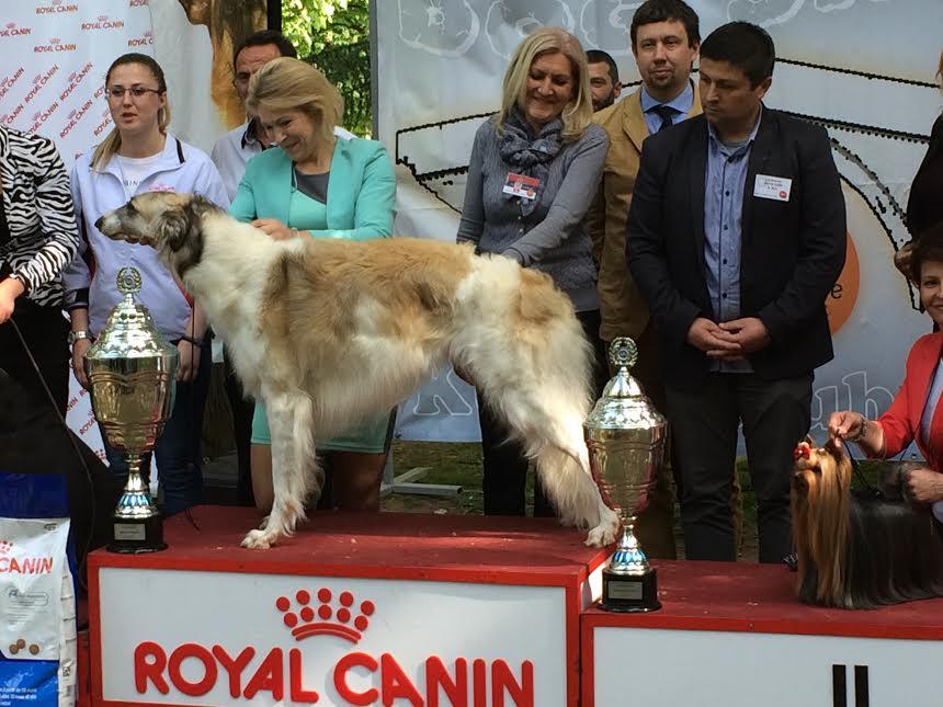Pas iz Moskve pobednik na izložbi u Vranju
