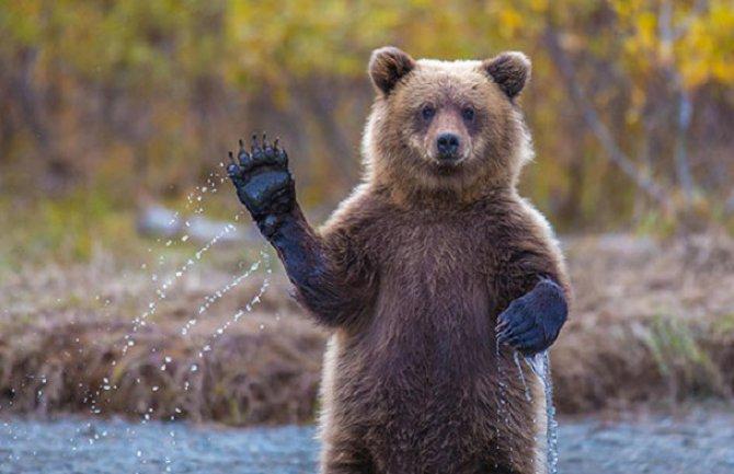 Medved šetao ulicama, ljudi u panici!