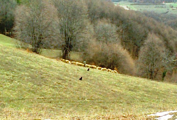 Država pokljanja mladim farmerima zemlju, u Leskovcu na raspolaganju oko 6 000 hektara