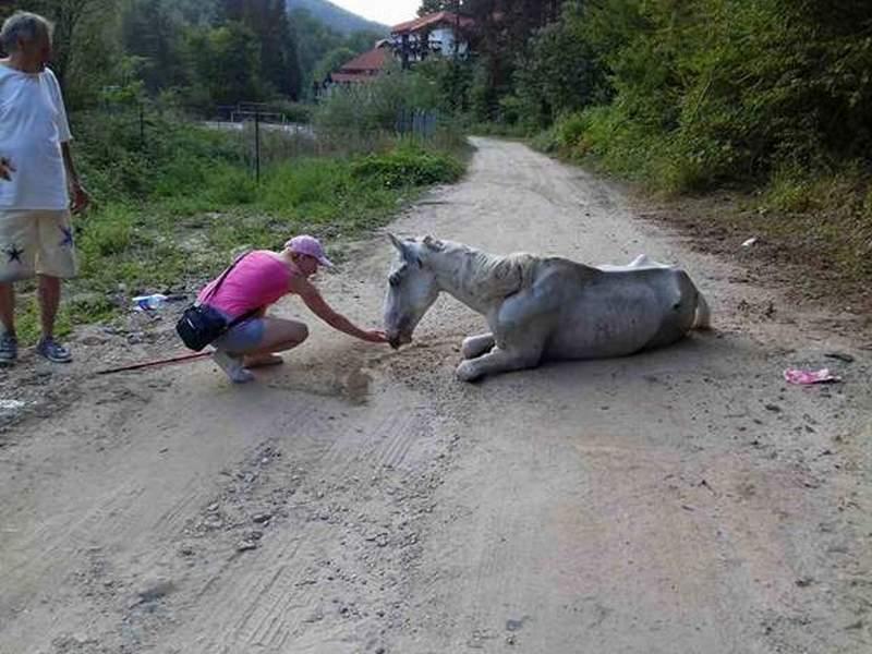 TUGA Na Kukavici izgladneli konji čekaju smrt