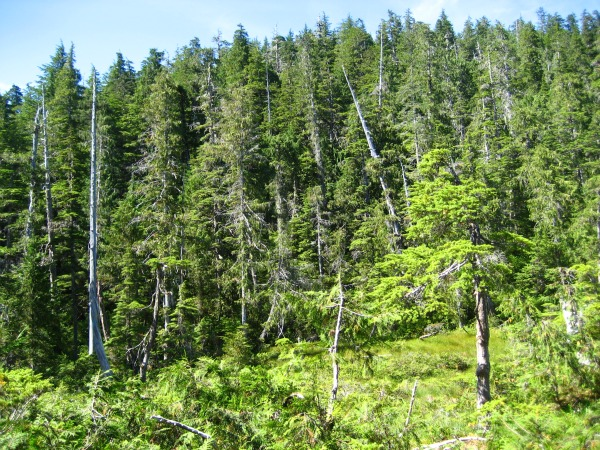 Leskovac kreće u obnovu šuma i revitalizaciju šumskih puteva