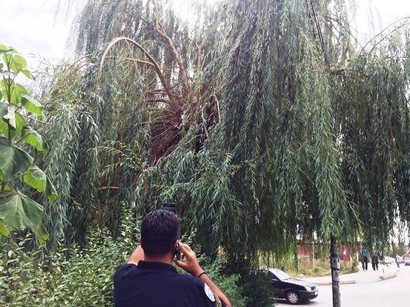 PAZI: U četvrtak i petak seku drveće kod donje kasarne