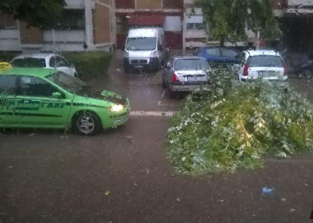NEVREME u Leskovcu rušilo drveće (VIDEO)