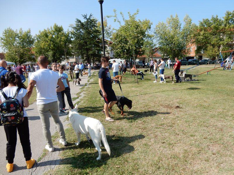 """Izložba pasa svih rasa u nedelju u parku kod stadiona """"Dubočica"""""""