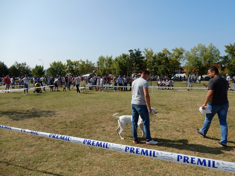 Pas Saše Tošića proglašen najlepšim na izložbi u Leskovcu