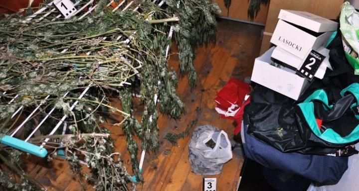U Nišu i selu kraju Leskovca zaplenjeno 24 kilograma marihuane, dileri pohapšeni