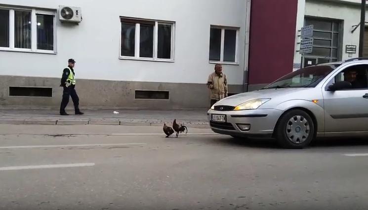 Kokoške izazvale KOLAPS u saobraćaju (VIDEO)