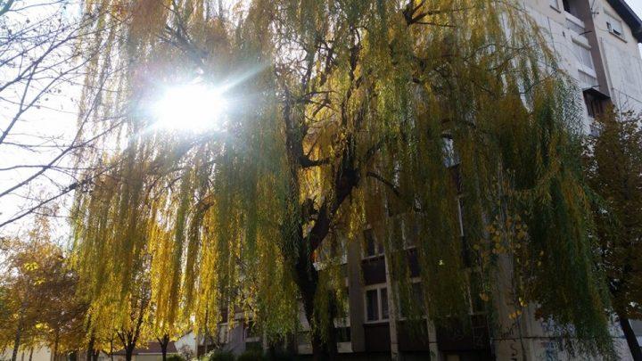 Priča o vrbi i njenoj tuzi