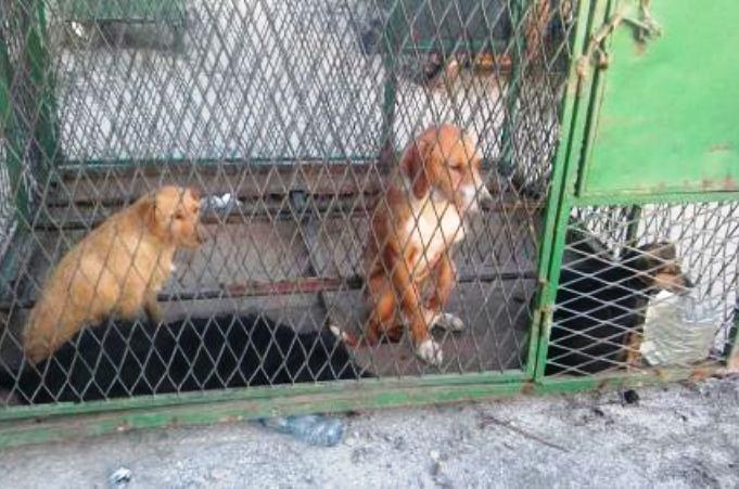 Nezakonito prevoze pse na gradsku deponiju