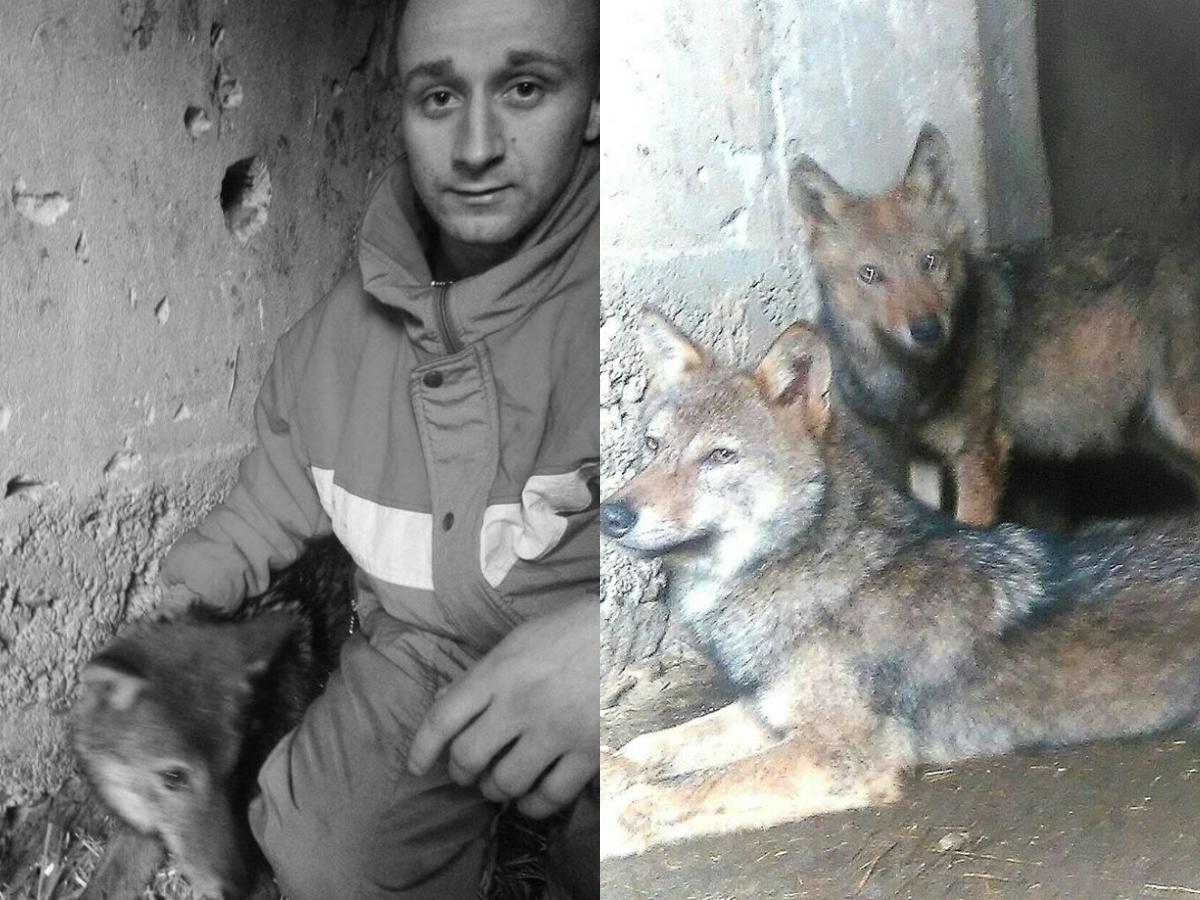 Odnegovao vukove sa Radana, pa ih poklonio zoološkom vrtu
