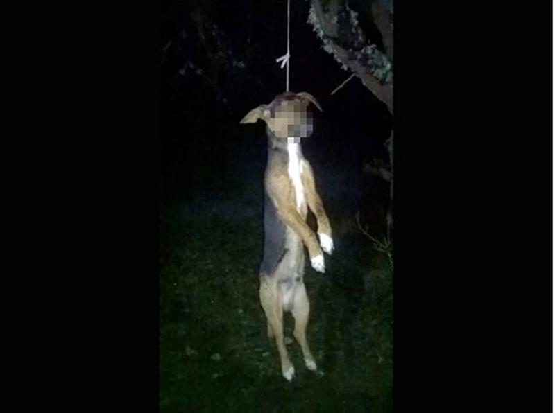 UŽASNO Obesili psa o drvo