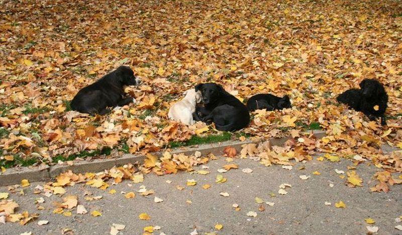 Nova pravila pri nadoknadi štete od ujeda pasa