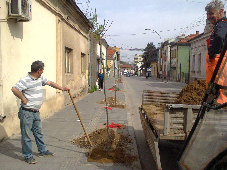 Novi drvoredi u nekoliko gradskih ulica