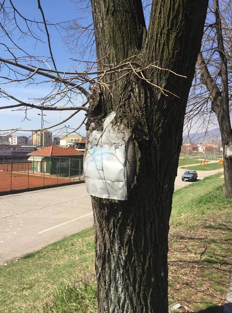 HIT METODA PIROĆANACA: Zabetonirali rupe u drveću da ih spase od truljenja