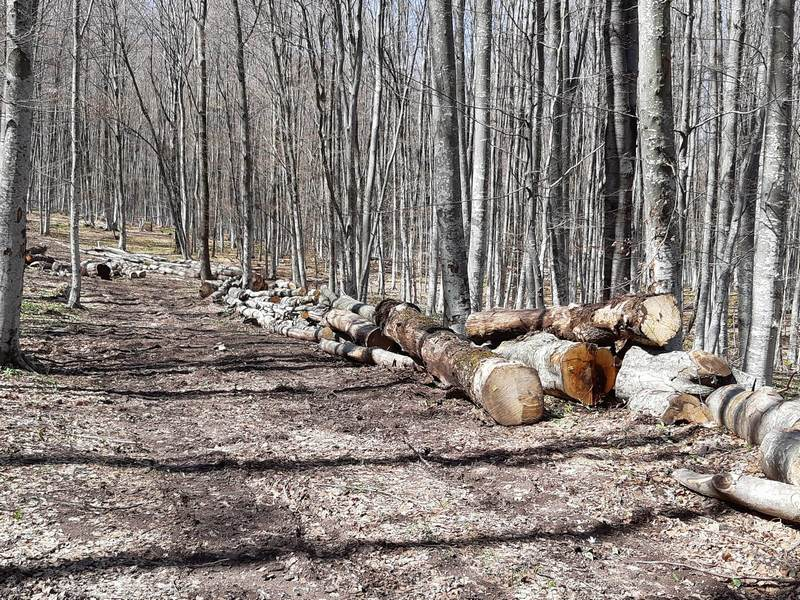 Oduzeto 148 kubika bespravno posečenog  ogrevnog drveta