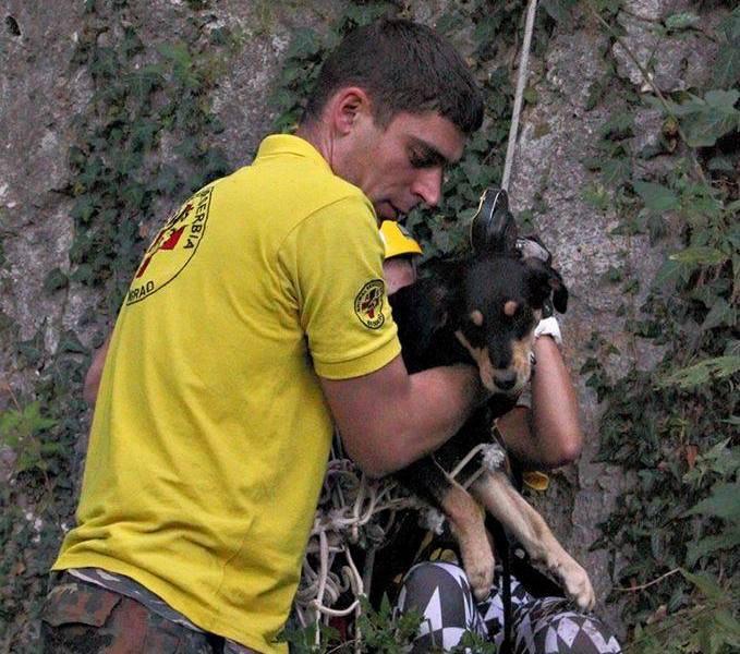 Nenad spasio na desetine životinja, spasavanje doge najstrašnije iskustvo
