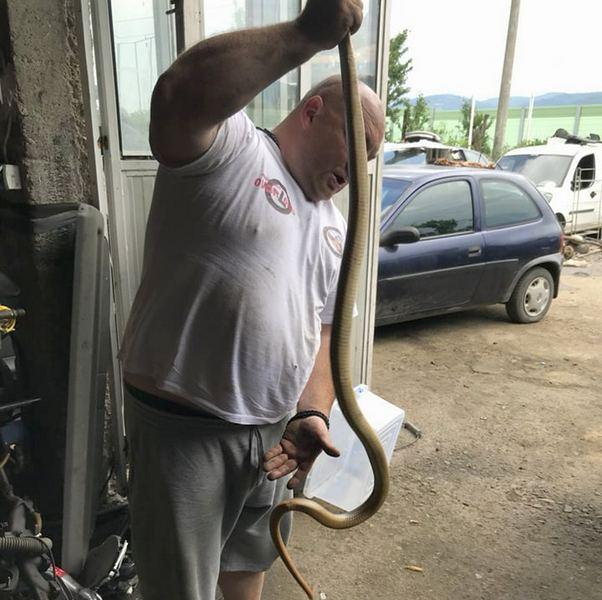 Izvukli zmiju dugačku preko dva metra koja se zavukla u amortizer automobila (VIDEO)