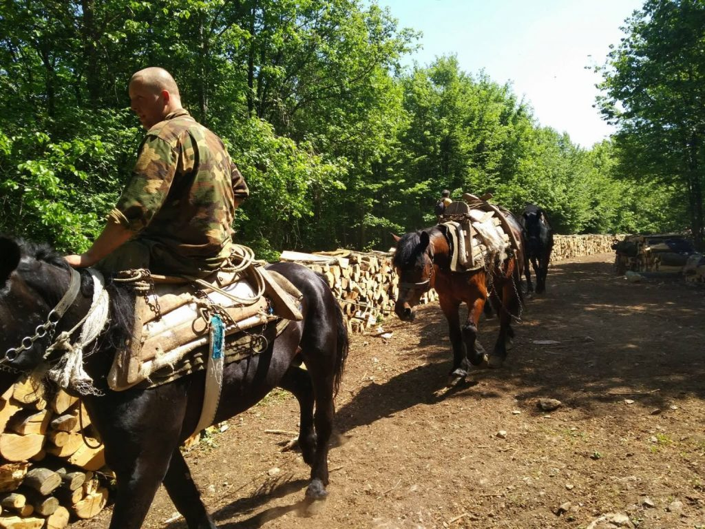 Samaraši iz Bosne nezamenljivi u sprskim šumama
