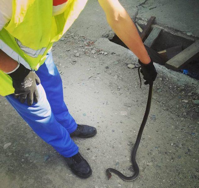 Povećan broj zmija i sova u Nišu