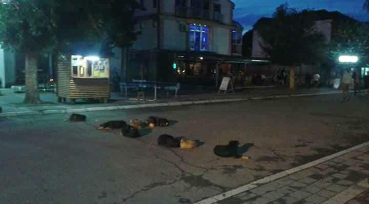 NOĆNA STRAŽA u Lebanu: Čuvaju centar, ujedaju građane