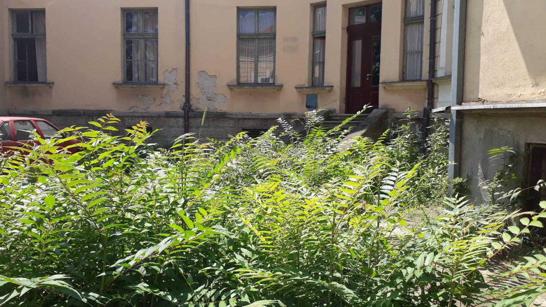 Zmijarnik u dvorištu Jablaničkog okruga, načelniku to bolna tačka (VIDEO)