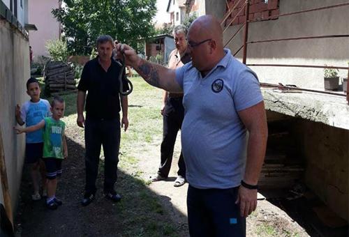 Uhvaćena retka vrsta zmije u dvorištu Mladenovića (VIDEO)