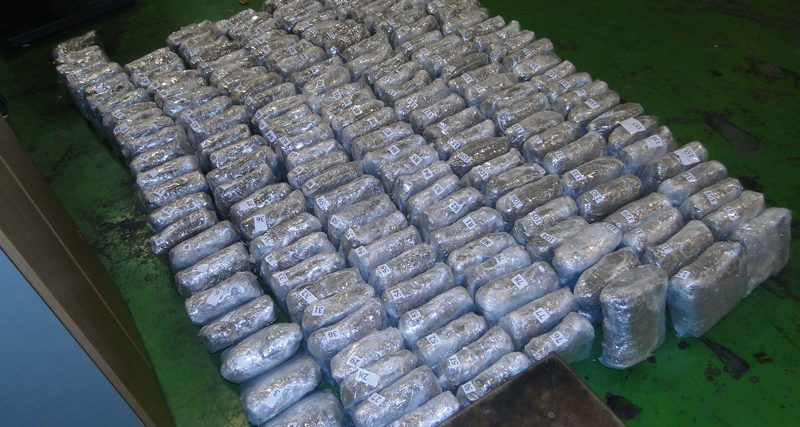 Zaplenjeno 590 kilograma marihuane