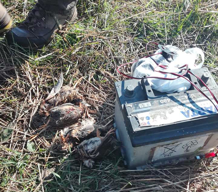 U zasedi uhapšeno 18 krivolovaca prepelica