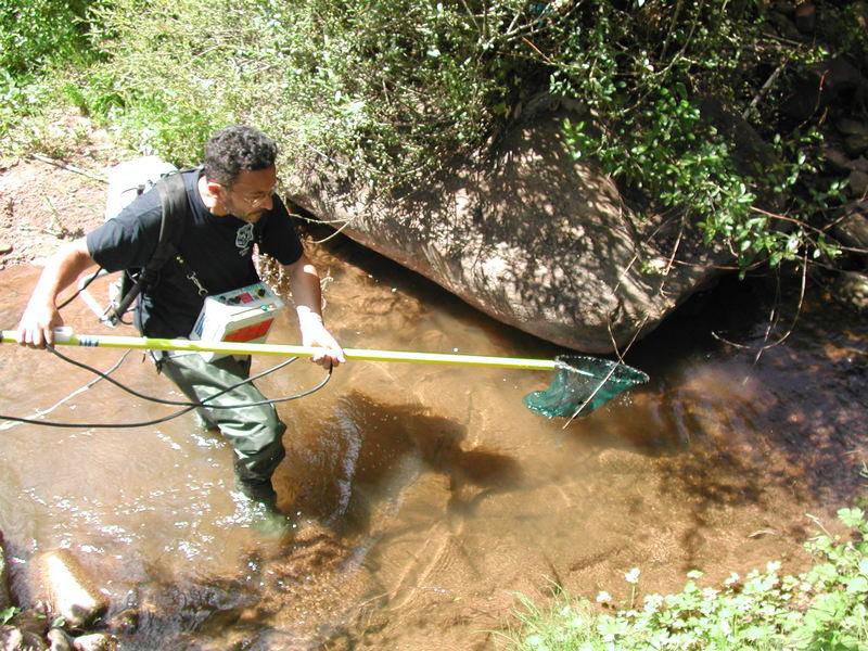 Pronađene zaštićene vrste u rekama na Staroj planini gde počinje gradnja hidroelektrana