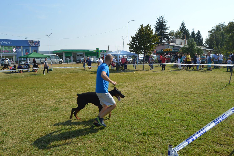Više od 300 pasa raznih rasa prodefilovalo na izložbi u Leskovcu