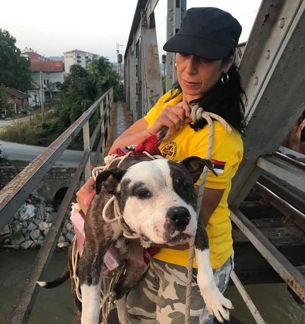Iz podnožja Železničkog mosta spasen pas koji je korišćen za borbe