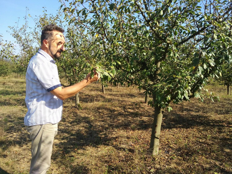 Prva organska rakija u Srbiji od organskih šljiva