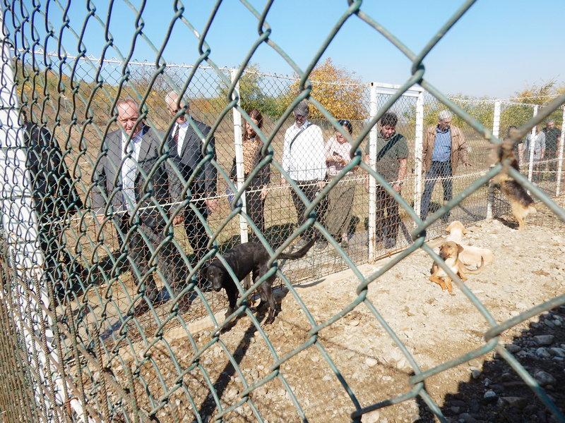 U novsagrađenom azilu mesta za 200 pasa (VIDEO)