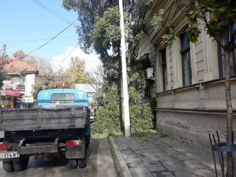 Drvo palo ispred opštine