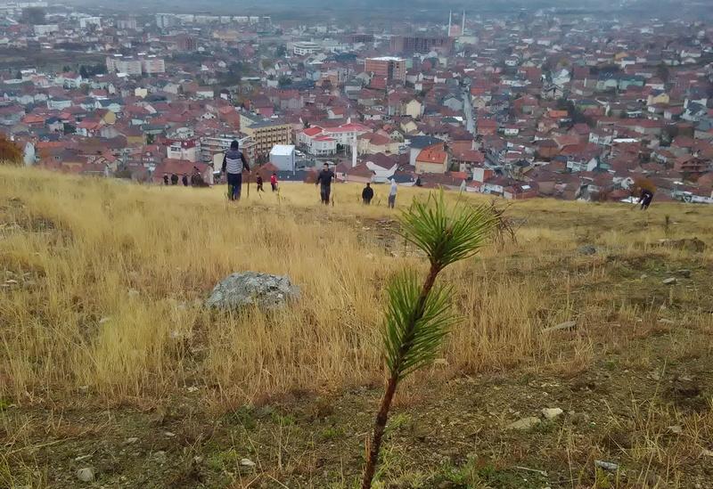 Jedno drvo za jednog ratnika: U Preševu posađeno 600 borova!