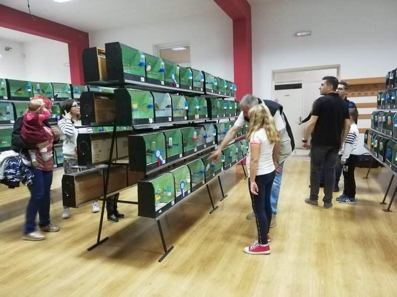 Prva Međunarodna izložba ptica u Leskovcu