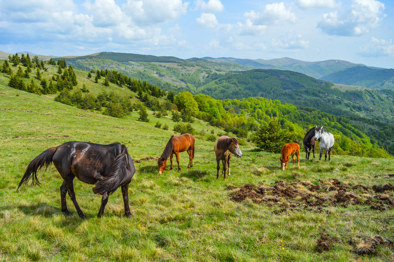 I konje ubijaju: Autohtona brdska kobila stradala jer je pasla tuđu travu!