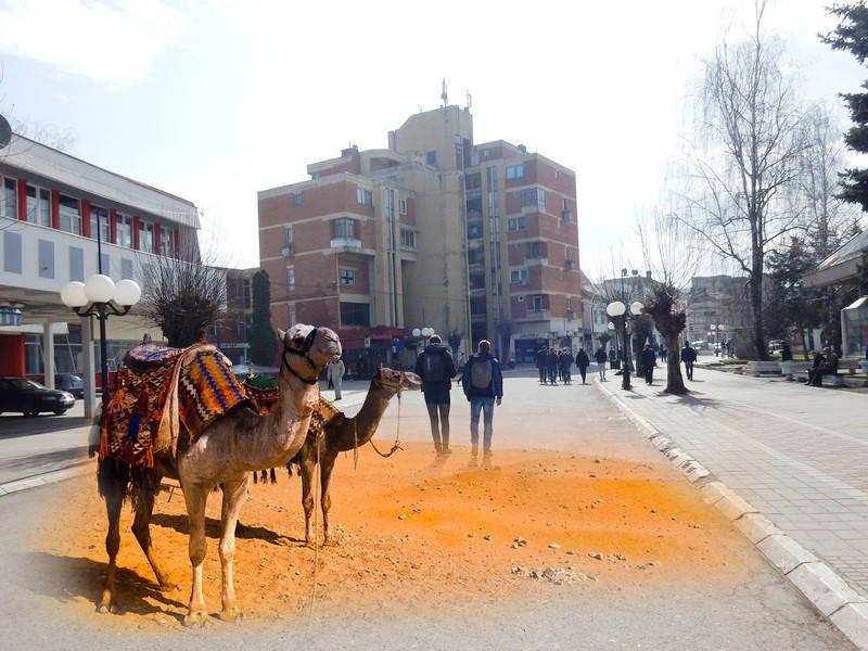 VEROVALI ILI NE Lebančani novcem građana kupuju dve kamile