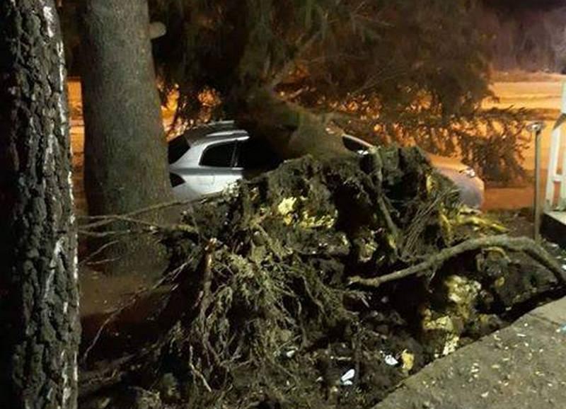 Vetar noćas lomio drveće, uništena vozila
