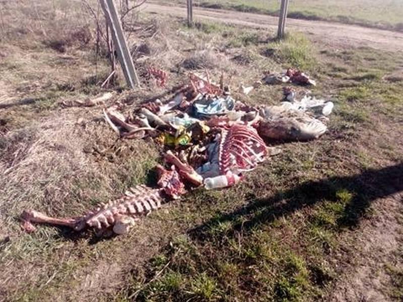 Životinjski otpad danima širi smrad na periferiji Leskovca, preti zaraza