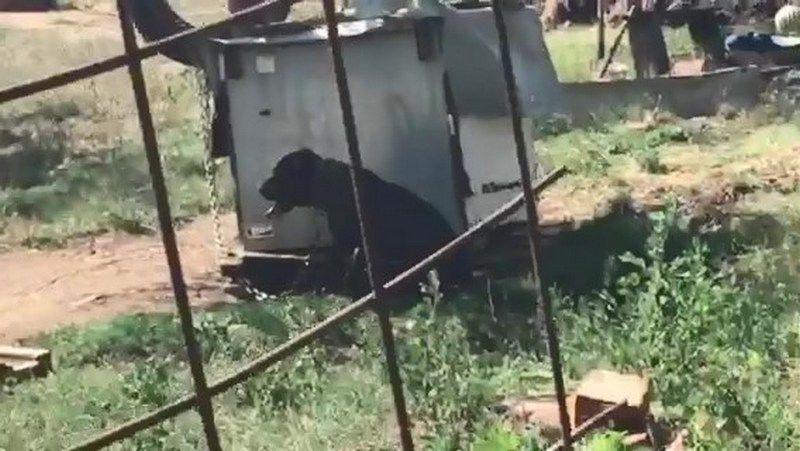 Nastavljamo da OTKRIVAMO Logor za pse na Hisaru, obučavaju ih za borbe koje organizuju po planinama (VIDEO)