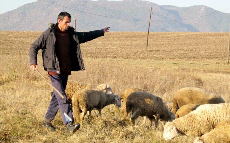 Pre podne profesor, posle podne pastir