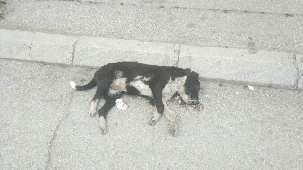 Ponovo truju pse u Leskovcu