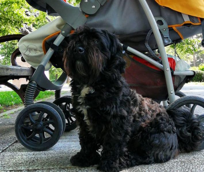 Ukraden zavezan pas ispred marketa dok je njegova vlasnica plaćala račun na kasi (video)