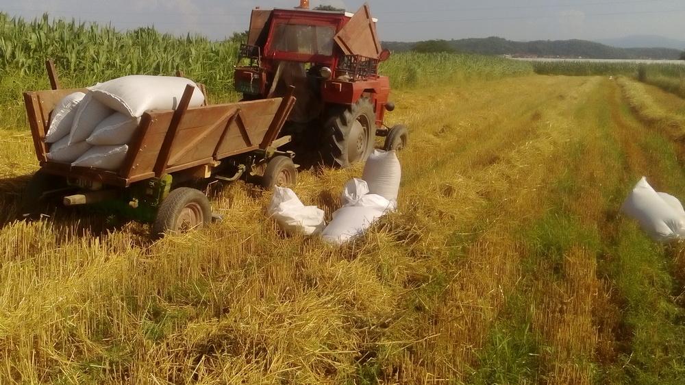 Sačuvajte plodnost zemljišta: ljuštite, a ne palite strništa