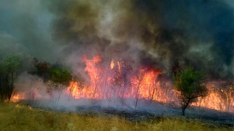 Namerno izazvan požar na brdu iznad Vranja i dalje bukti