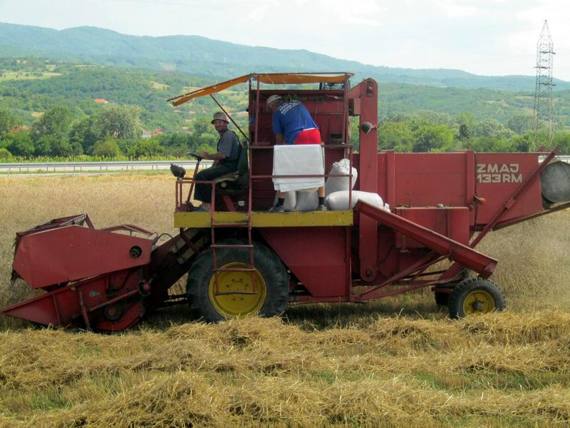 Žetva pšenice u Pčinjskom okrugu u punom jeku