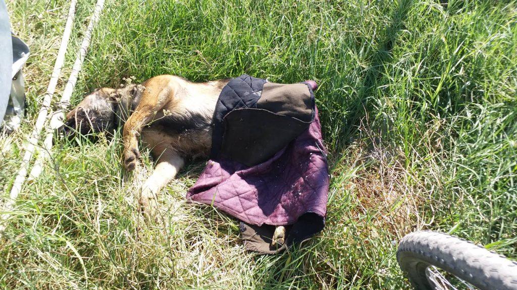 Nesnosan smrad koji se širi naseljem Kumalak je od leševa potrovanih životinja (UZNEMIRUJUĆE FOTOGRAFIJE)
